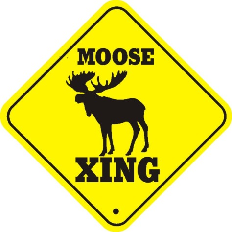 tumblr_static_moose_crossing
