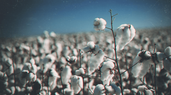 high-cotton.png