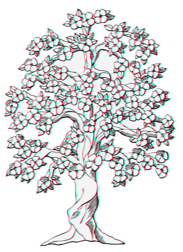 65-653646_magnolia-tree-at-getdrawings-com-free-for-tree.png